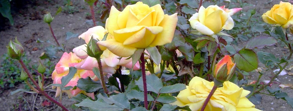 Vrtnarske storitve