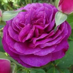 Sadike vrtnic Heidi Klum